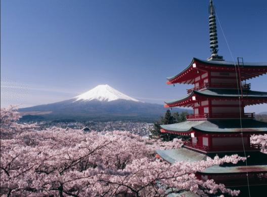 Kirschblütenzeit in Japan (Bild: © Tour Vital)