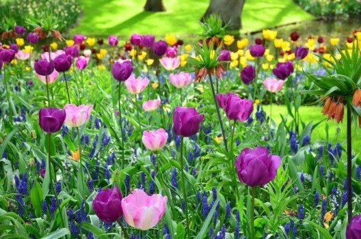 Im Frühjahr blühen im Keukenhof sieben Millionen Frühjahrsblüher. (Bild: © rob3rt82 - fotolia.com)