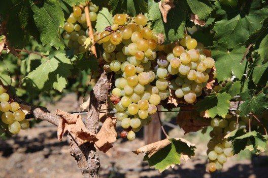 Südafrika hat eine 350-jährige Weinkultur. (Bild: © Benshot - fotolia.com)