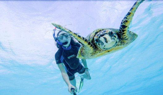 """Mara mit Meeresschildkröte """"Jeffrey"""" auf den Malediven. (Bild: UNIQ)"""