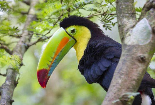 Die Artenvielfalt auf Costa Rica sucht ihresgleichen. (Bild: Ivan Kuzmin - shutterstock.com)