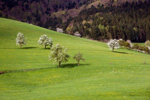 Blütenwanderung im Schwarzwald (Bild: a9photo – Shutterstock.com)
