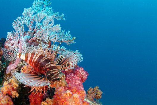 Der reiche Fischbestand macht die Seychellen zu einem der besten Tauchreviere weltweit. (Bild: Tony Baskeyfield - Seychelles Tourism Board)
