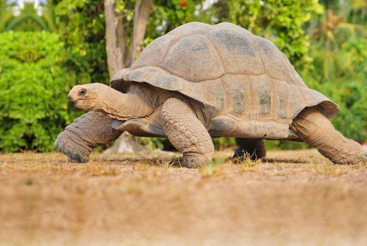 Die Tierwelt der Seychellen ist ebenso vielfältig wie die Inseln selbst. (Bild: SeyVillas)