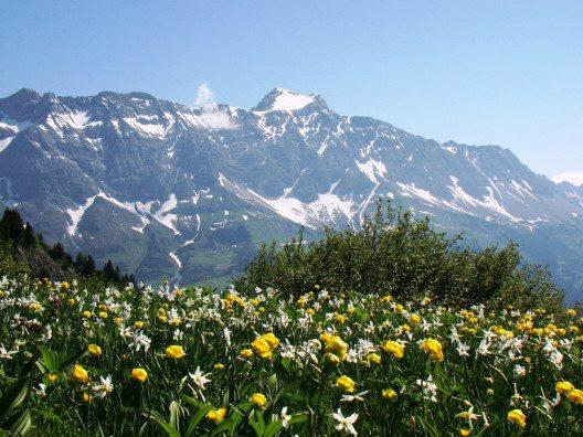 Der Seewiser Bergfrühling vor der traumhaften Bergkulisse des Schesaplanamassivs. (Bild: Ernst Gredig)