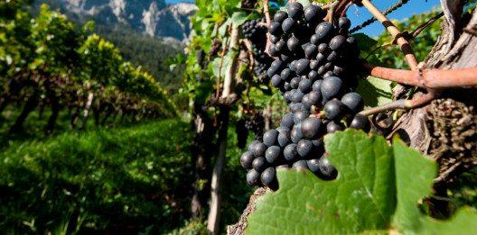 Wein(ver)Führung - In vino veritas. (Bild: Chur Tourismus/Andrea Badrutt)