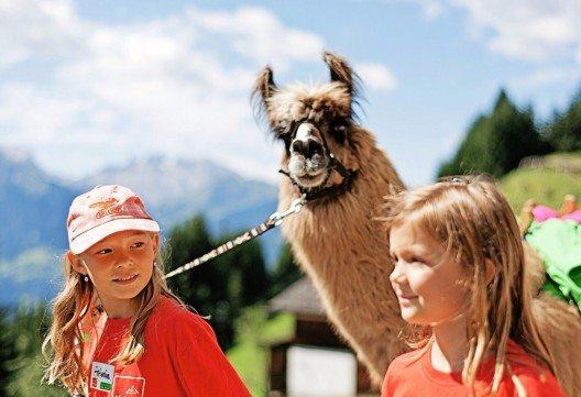 Lama-Trekkingtour (Bild: © Markus Gmeiner - Montafon Tourismus GmbH)