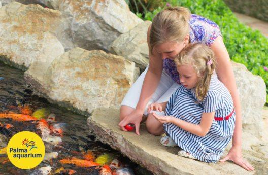 Das Palma Aquarium bringt Besuchern die Ökosysteme der Meere näher.(Bild: © palmaaquarium)