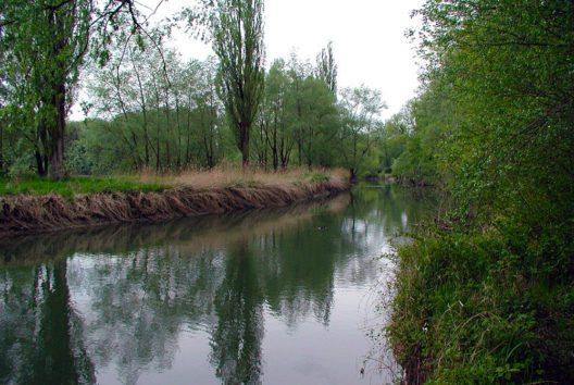 Der Rhein in Höchst (Bild: User2538, Wikimedia, CC)