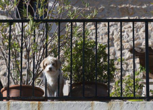 Auf Mallorca erlaubt jeder zehnte Vermieter tierische Gäste. (Bild: © Artesia Wells - shutterstock.com)