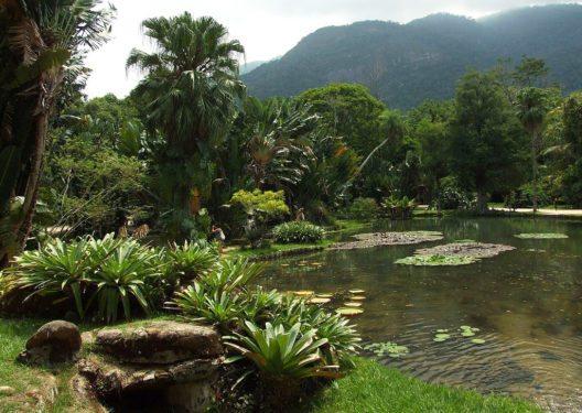 Jardim Botânico von Rio de Janeiro (Bild: LubovGorshkova, Wikimedia, CC)
