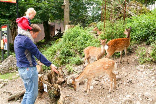 Natur- und Tierpark Goldau (Bild: Stefano Ember – Shutterstock.com)