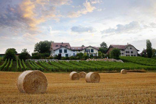 Morges ist Teil der bekannten Weinstrasse. (Bild: ExFisherman – Shutterstock.com)