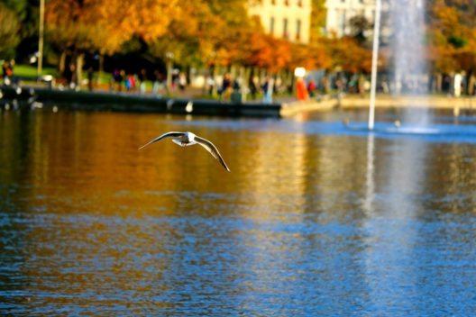 Am Zugersee (Bild: © Florian Muharremi - shutterstock.com)