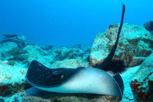 Ave Maria Rock (Bild: © Seychelles Tourism Board)