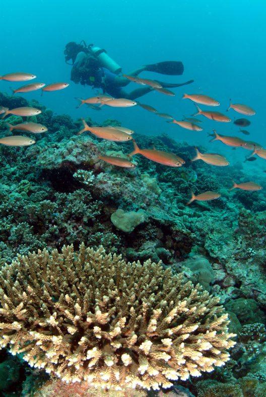 Insgesamt finden sich um die Seychellen an die 80 verschiedene Tauch- und Schnorchelplätze. (Bild: © Seychelles Tourism Board)