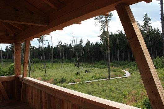 Pöllwitzer Wald: Blick vom Aussichtsturm auf den Laufsteg (Bild: © Pollywauz - Wikimedia, Creative Commons Attribution-Share Alike 3.0 Unported)
