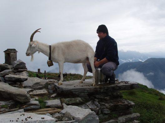 Auf der Alpe Nimi