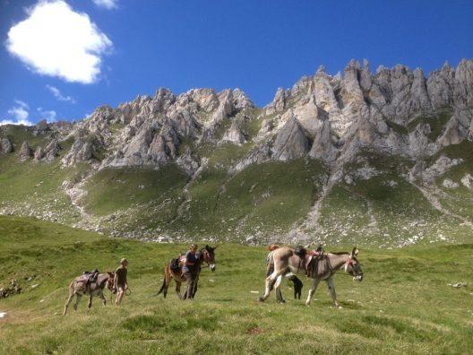 Maultier- und Eseltrekking