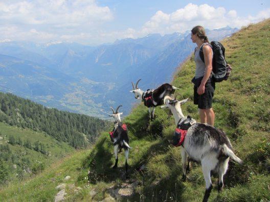 Geführte Trekkingtouren mit Pack-, Begleit- oder Reittieren
