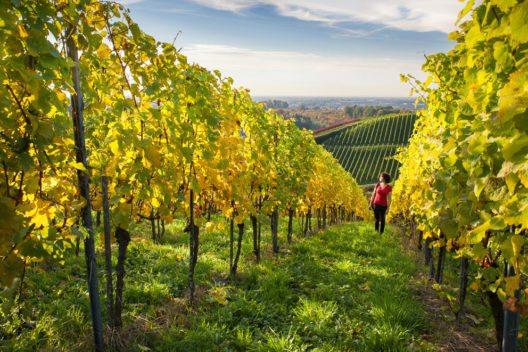 Weinregion Schwarzwald (Bild: TI Sasbachwalden / www.schwarzwald-tourismus.info)