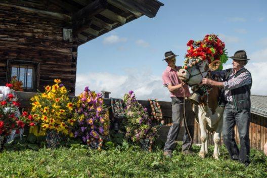 Kreppblumen für das Almvieh (Bild: © Tourismusverband Wilder Kaiser)