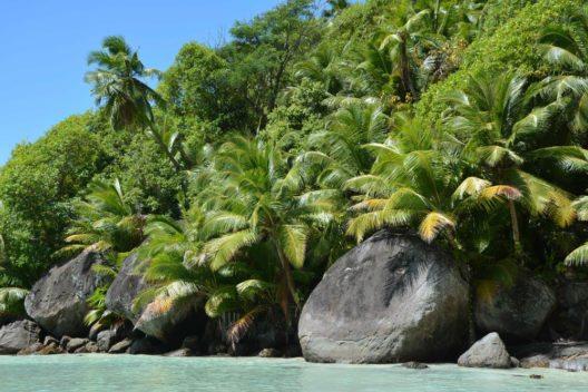 Flora und Fauna der Seychellen (Bild: © SeyVillas)