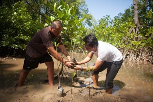 Aufforsten im Tun Mustapha Park: Mangroven stabilisieren Küsten, nehmen CO2 auf, dienen Meereslebewesen als Brutstätten und bieten Zuflucht. (Bild: © WWF Malaysia / MazidiAbdGhani)