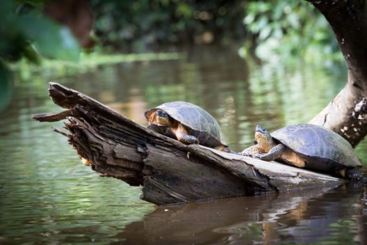 Der Nationalpark Tortuguero (Bild: ronnybas – Shutterstock.com)