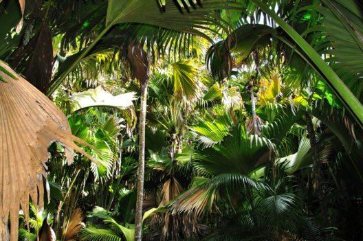 Nationalpark Vallée de Mai (Bild: © Raymond Sahuguet - Seychelles Tourism Board)