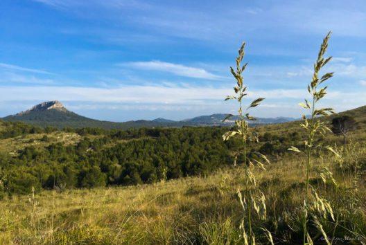 Landschaft bei Cala Torta (Bild: fincallorca)