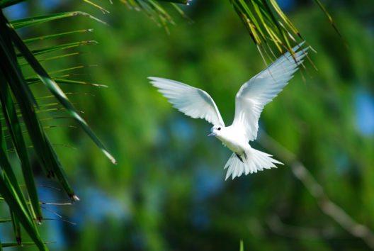 Die Vogelwelt der Seychellen gehört zu den artenreichsten im gesamten westlichen Indischen Ozean. (Bild: Seychelles Tourism Board)