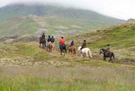 Island auf dem Pferderücken erleben (Bild: GetYourGuide)