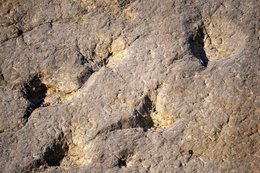 Brachiosaurus-Spuren in einem Steinbruch, Oberdorf / Lommiswil (Bild: Chriusha, Wikimedia, CC)
