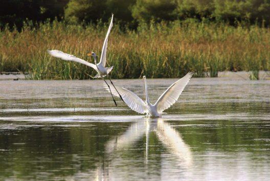 Die Sani Wetlands beherbergen über 214 teilweise seltene Vogelarten. (Bild: Sani Hotels Resorts)