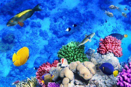 Korallen und Fische im Roten Sea (Bild: © slava296 - shutterstiock.com)