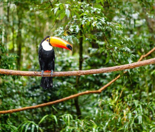 Ein Mega-Staudamm in Brasiliens Regenwald wird nicht gebaut. (Bild: © MarcusVDT - shutterstock.com)