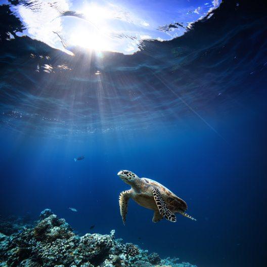 Unterwasser - Tierwelt mit Tieren, Taucher Abenteuer auf den Malediven. (Bild: © Willyam Bradberry - shutterstock.com)