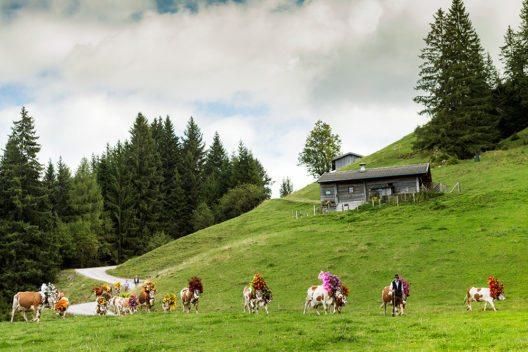 Etwa 100 Tage dauert der Sommer auf den Almen am Wilden Kaiser – anschliessend verlassen Senner und Kühe die Berge und ziehen gemeinsam ins Tal (Bild: © TVB Wilder Kaiser/Peter von Felbert)