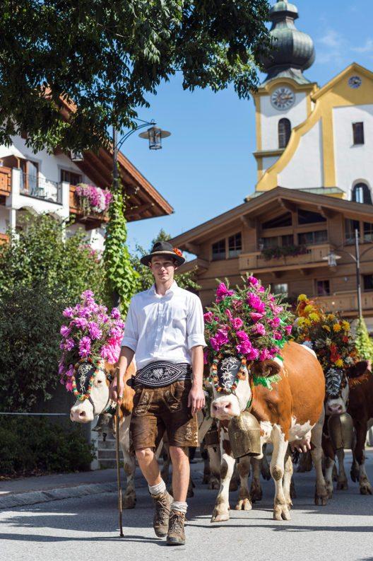 """""""Hoam geht´s"""", heisst es Ende September für die Kühe in der Ferienregion Wilder Kaiser – im Tal werden Senner und Tiere von Einheimischen wie Gästen willkommen geheissen (Bild: © TVB Wilder Kaiser/Peter von Felber)"""