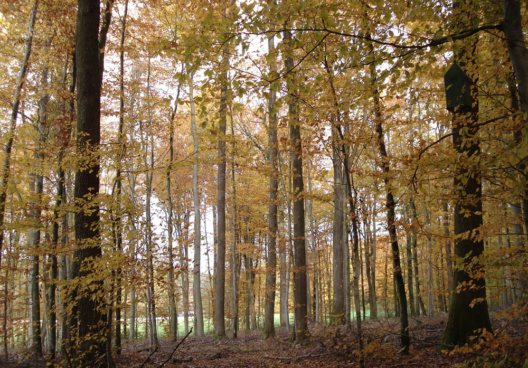 Allschwiler Wald (Bild: gomveron, flikr.com, CC)