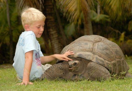 Junge mit Riesenschildkröte (Bild: © Seychelles Tourism Board)