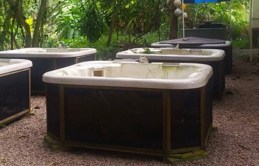 Ausrangierte Whirlpools wurden zu Terrarien umfunktioniert. (Bild: Banyan Tree)