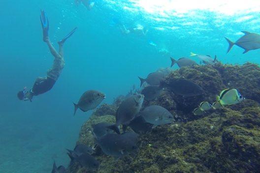 Unterwasserwelten - Costa Rica unter Wasser (Bild: © Instituto Costarricense de Turismo)