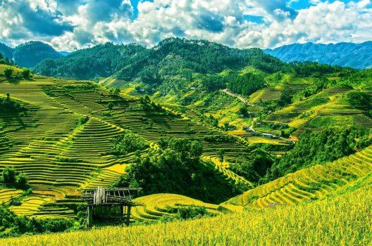 Reisterrassen in Vietnam (Bild: pixabay)