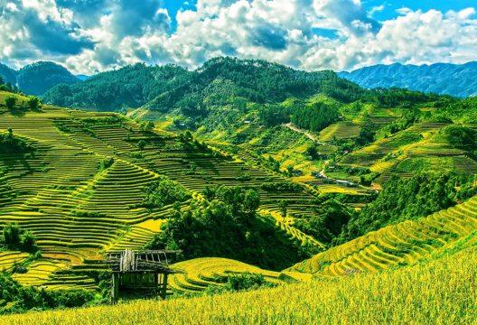 Reisfelder in Vietnam (Bild: © Pixabay)