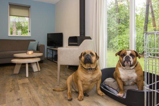 In den Hunde-Ferienhäusern wurde an alles gedacht, damit Hundebesitzer und ihre vierbeinigen Freunde einen erholsamen Urlaub verbringen können.