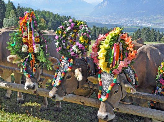 Der Rückkehr der Almtiere ins Tal wird jeden Herbst gebührend gefeiert. (Bild: © hall-wattens.at)