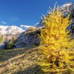 Langermatte mit Blick auf den Wildstrubel (Bild: © Lenk Simmental Tourismus - swiss-image.ch/Patrick Aegerter)