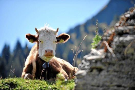 feature post image for Simmentaler Traditionen im Oktober: AlpKultur-Tage Lenk
